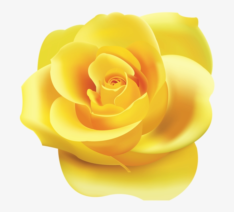 Png Roses Yellow Rose Clipart Png Transparent Png 800x763 Free
