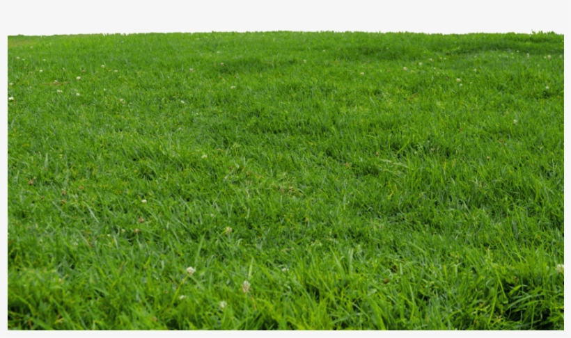 Grass png for photoshop