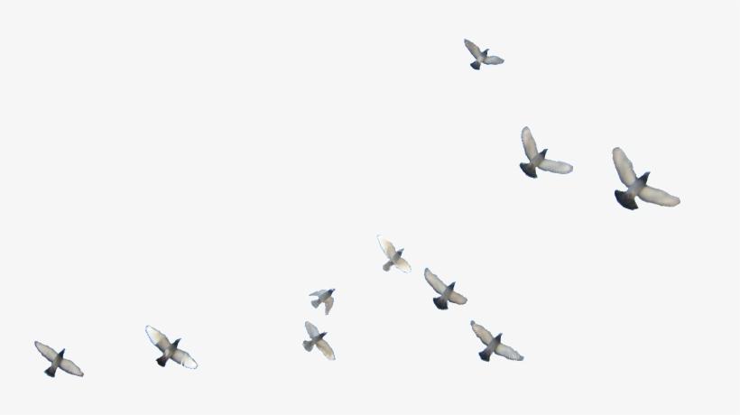 Flying Birds Png - Flying Bird Png Transparent PNG - 800x600