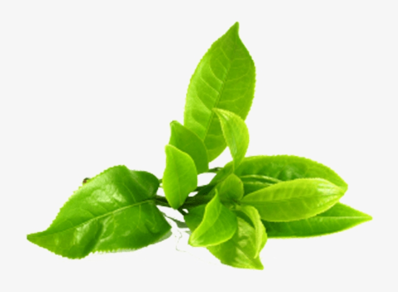 Green Tea Png Image Green Tea Leaves Png Transparent Png 468x349 Free Download On Nicepng