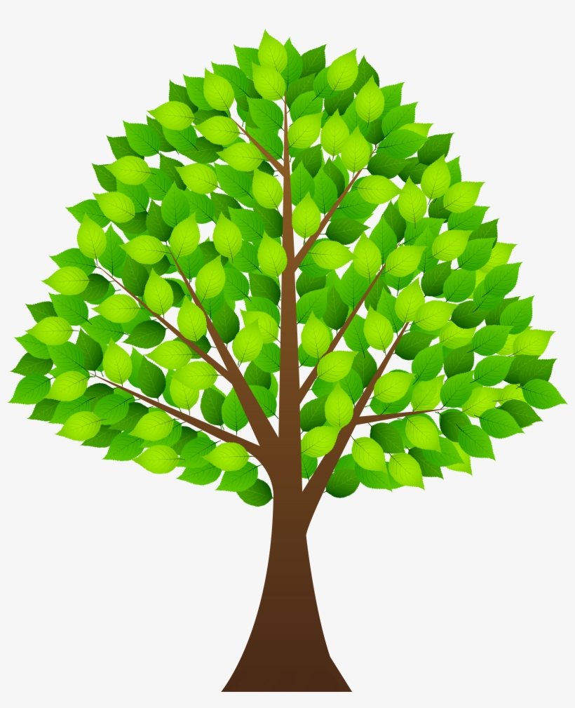 28 Collection Of Plant Leaf Clipart Png High Quality Tree Clipart