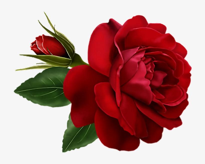 Rose Red Gif 1