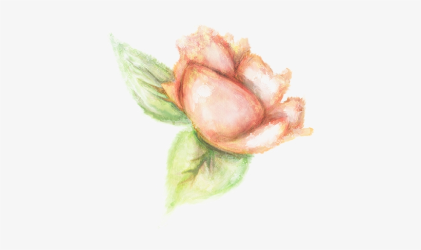 Vegetaux Aquarelle Fleur Rose Orange Garden Roses Transparent Png