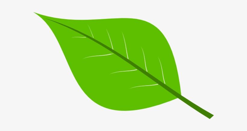 Green Leaf Clip Art At Clker Leaf Cartoon Transparent Background Transparent Png 600x356 Free Download On Nicepng