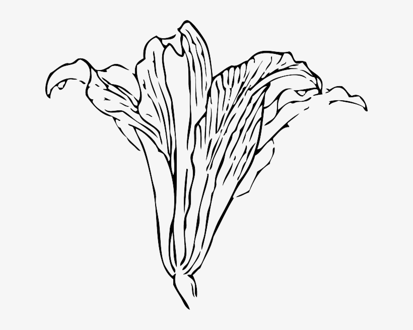 Black Outline Flower White Plant Automatic Flower Vine Drawing Png Transparent Png 640x575 Free Download On Nicepng