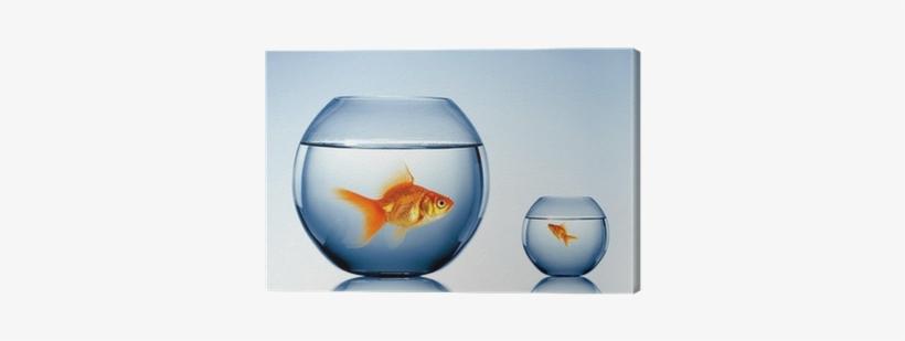 Fish Bowl Transparent Png 400x400 Free Download On Nicepng
