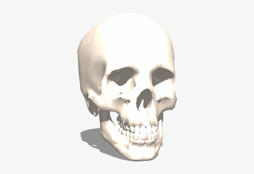 The 3d Skull From Archive3d - 3d Printing Transparent PNG - 1200x675