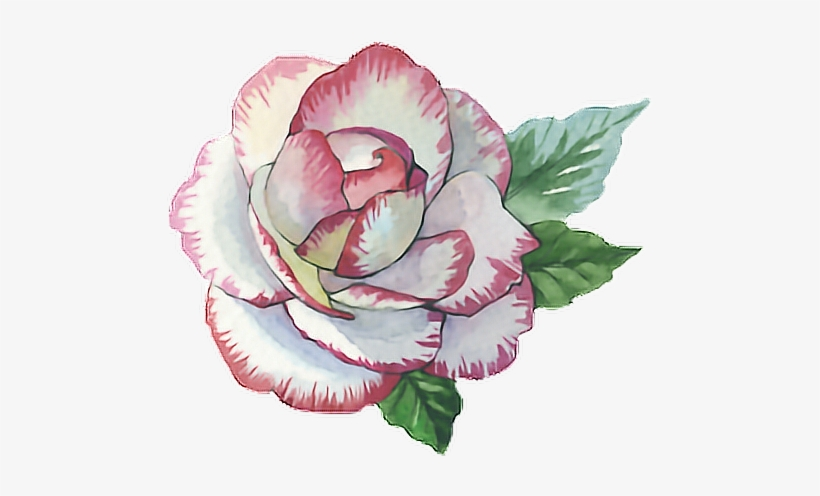 Rose Roses Paint Watercolor Watercolour Flower Pink Rose Paint Png