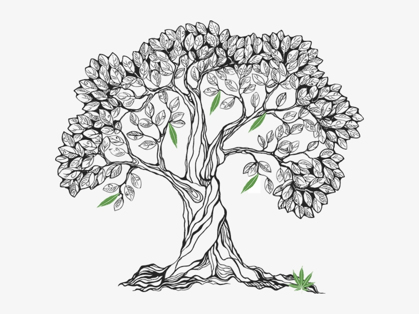 Svg free stock bodhi at getdrawings com free for personal realistic oak tree drawing - Tree images free download ...