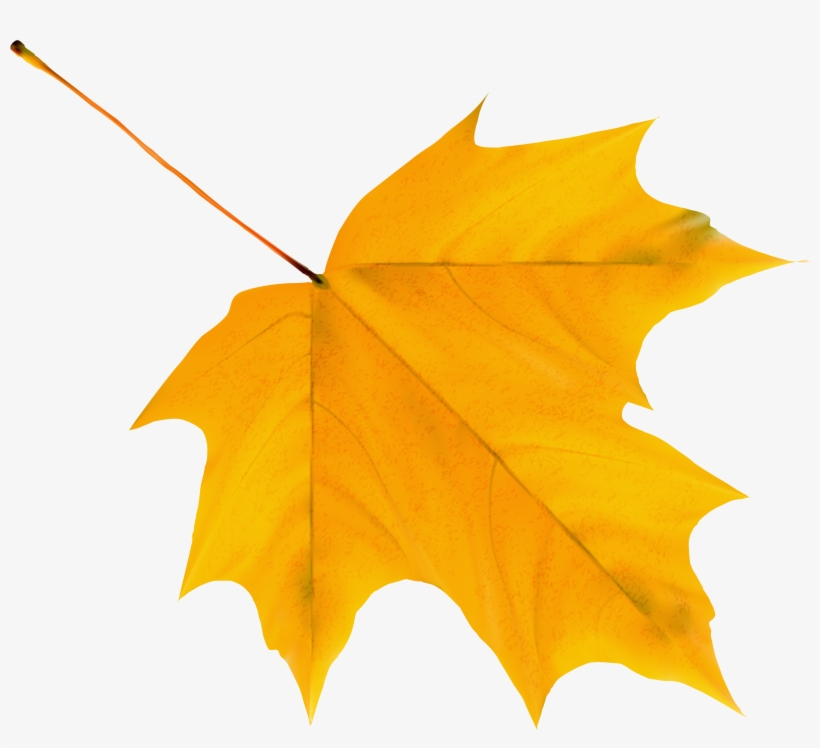 Yellow Autumn Leaf Png Clipart Image Cartoon Autumn Leaf Png Transparent Png 3977x3428 Free Download On Nicepng