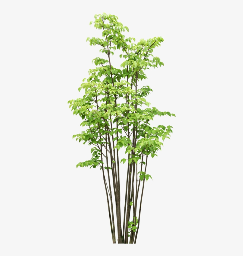 Arbre Tubes Png Bamboo Tree Photoshop Transparent Png 398x800
