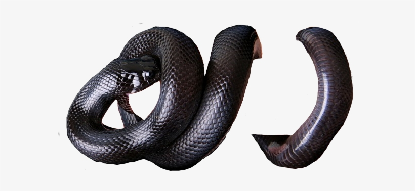 Report Abuse Snake Png For Picsart Transparent Png 614x310 Free Download On Nicepng If you like, you can download pictures in icon format or directly in png image format. report abuse snake png for picsart