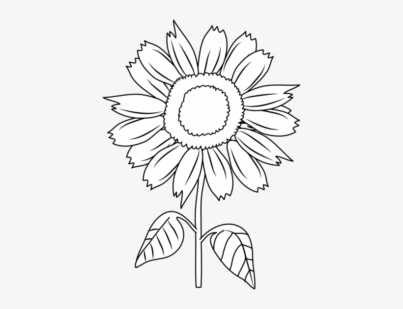 Sunflower black. And white clipart