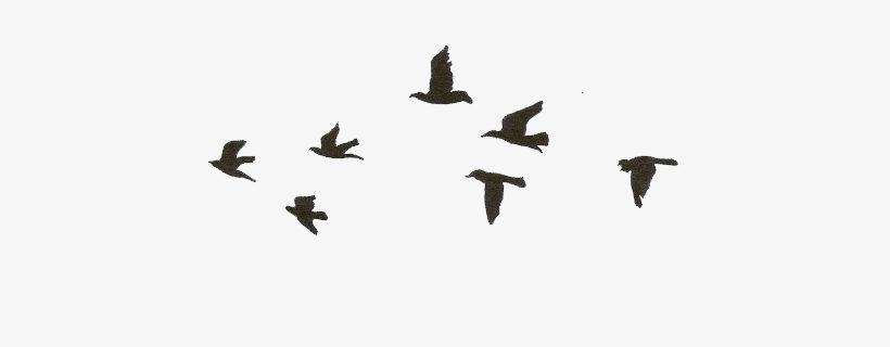 Small But Creative Tattoo Ideas , Birds Drawing Transparent