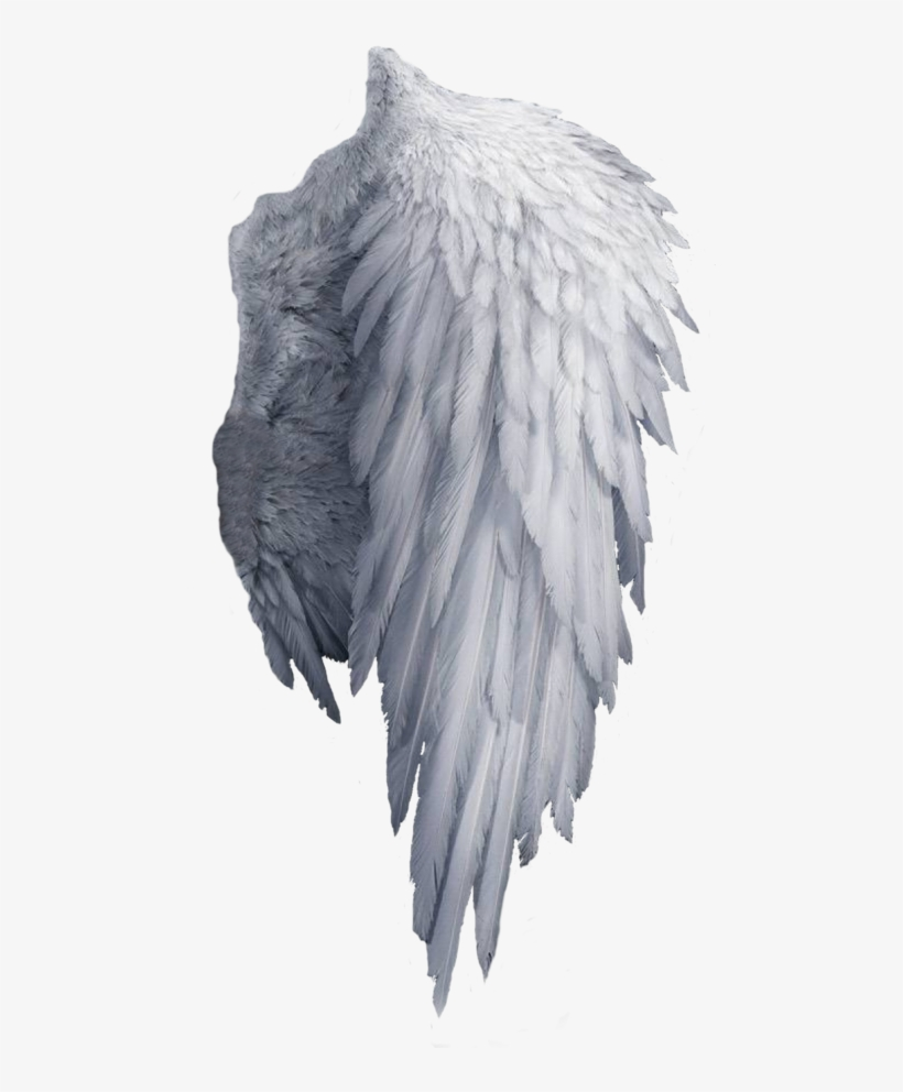 White Angel Wings Png Transparent PNG - 480x930 - Free