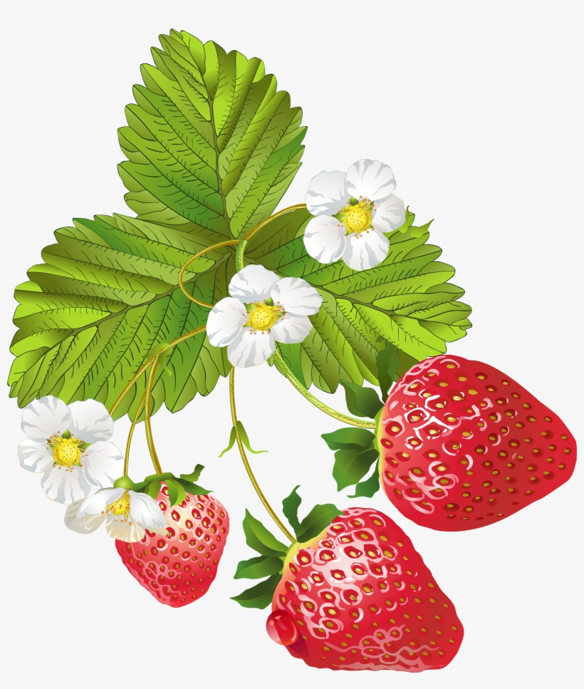 Strawberry Plant Pictures Free