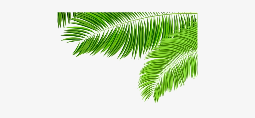 Green Tropical Leaf Png K Pictures Full Clip Art Palm Tree Leaves Transparent Png 450x300 Free Download On Nicepng Tropical wallpaper designed by lemon. green tropical leaf png k pictures full