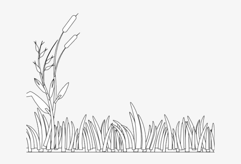 Раскраска для детей трава на прозрачном фоне