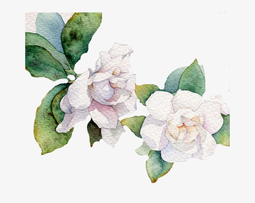 Flower Vector Png Image Purepng: White Watercolor Flower Vector