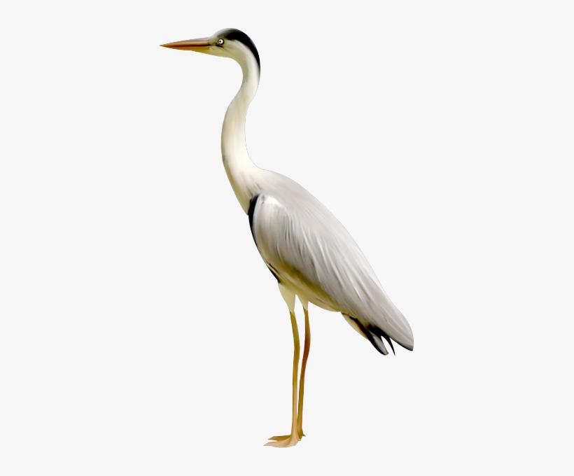 Crane Bird PNG & Download Transparent Crane Bird PNG Images