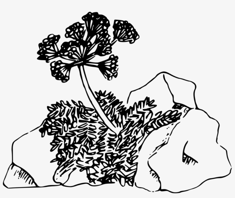 Desert Computer Icons Plants Floral Design Drawing