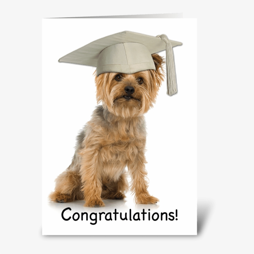 aa239c9e3fede Graduation Yorkie With Cap Congrats Greeting Card - Yorkshire Terrier  Smoking Cigarette