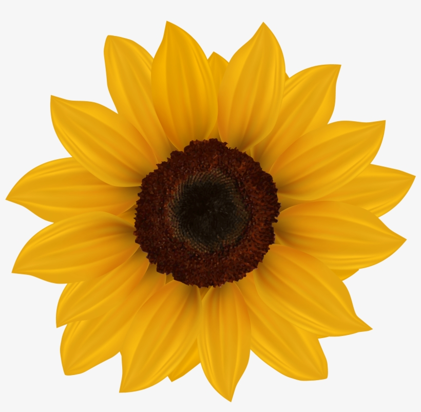 Sunflower Png Clipart Image - Sunflowers Clipart ...