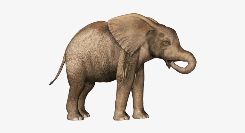 Best Free Elephants High Quality Png Baby Elephant No Background Transparent Png 500x366 Free Download On Nicepng All baby elephant clip art are png format and transparent background. baby elephant no background transparent