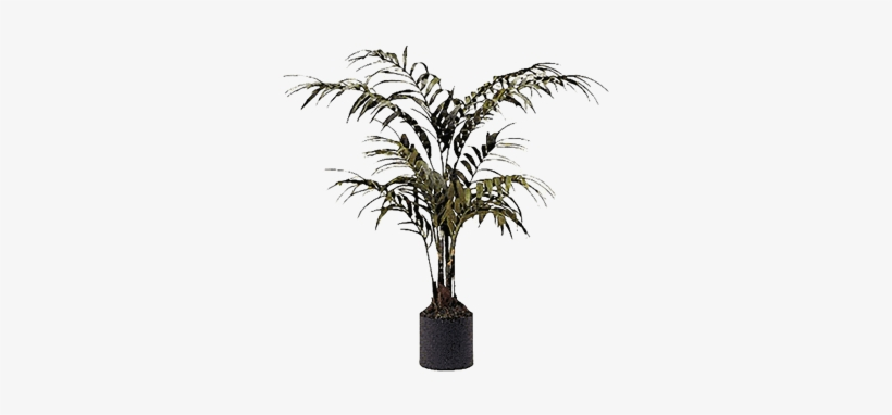Silk Palm Tree In Container Brook Furniture Rental Transparent Png