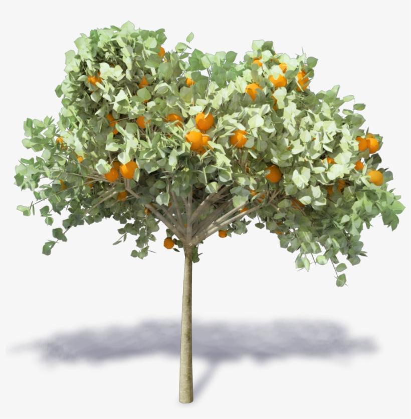 Orange Tree Revit Transparent PNG - 1000x1000 - Free Download on NicePNG