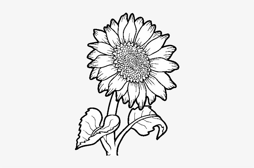 Dibujo De Un Girasol Para Colorear Outline Images Of