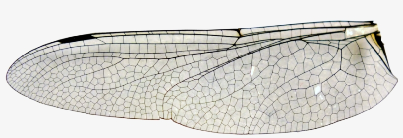 Large Dragonfly Wing Stock Insect Wing Png Transparent