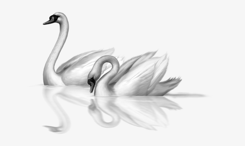 Download standing swan free clip-art png images background | TOPpng