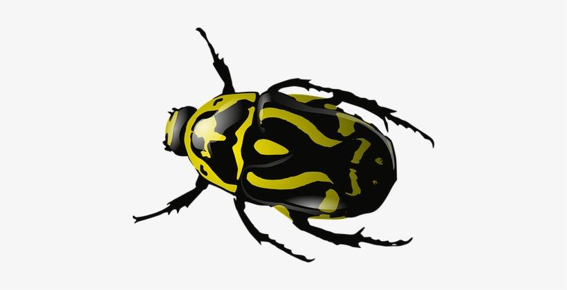 Bug Insect Beetle Wasp Yellow Black Wildli - Clip Art Beetle