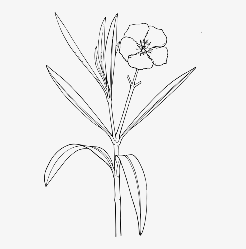 Oleander Drawing Flower Plants Shrub Drawing Of Yellow Oleander