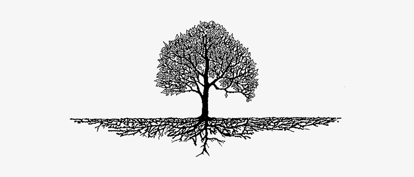Source - - Tree Roots Clipart@nicepng.com