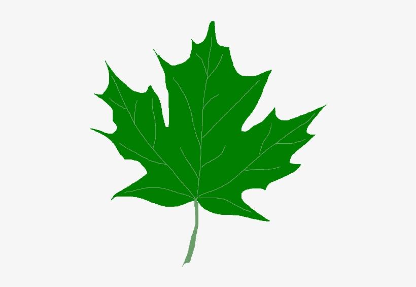 Apple leaf clip art dromgce top in 2020   Clip art, Leaf outline, Free clip  art