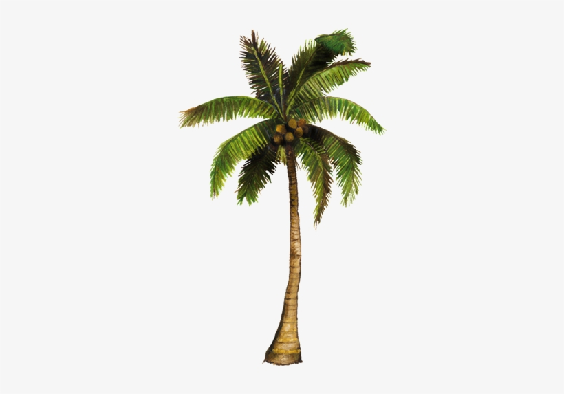 Vecinos Verdes Coconut Tree Animated Gif Transparent Png 750x502 Free Download On Nicepng