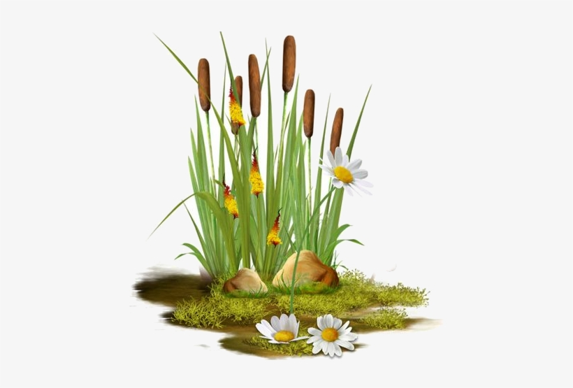 Clipart Pond Reeds Transparent Transparent Png 450x475 Free Download On Nicepng
