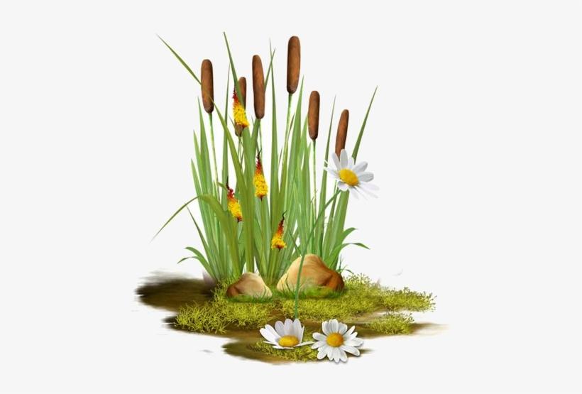 Clipart Pond Reeds Transparent Transparent Png 450x475 Free Download On Nicepng