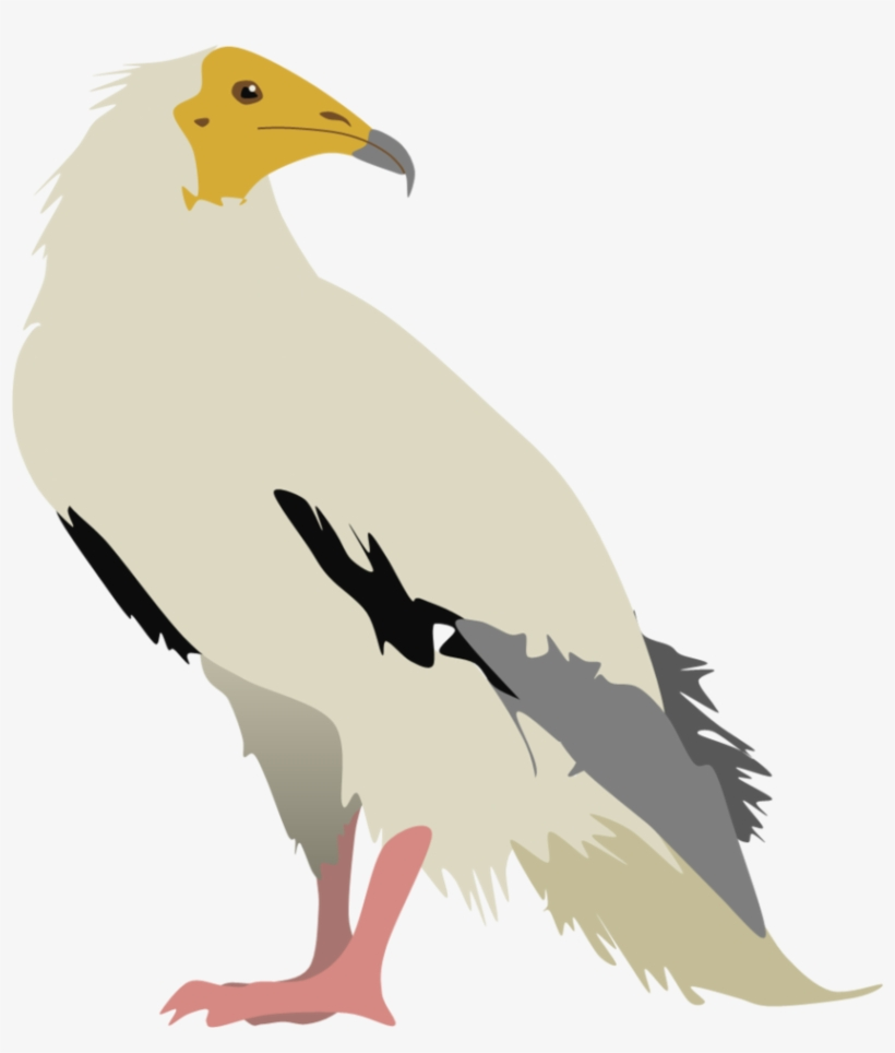 Vulture Vector Jpg Transparent Library Bird Of Prey Transparent Png 842x949 Free Download On Nicepng