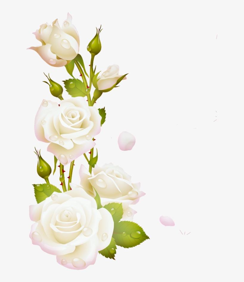 Marcos De Flores Blancas Transparent Png 872x872 Free Download