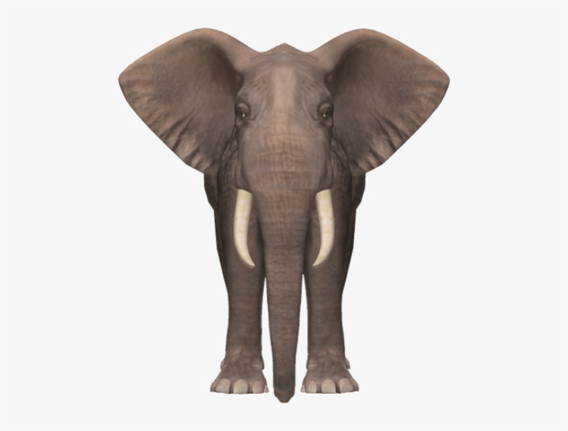 Free Png Elephant Png Images Transparent Elephant Png Transparent Png 480x543 Free Download On Nicepng ✓ free for commercial use ✓ high quality images. nicepng