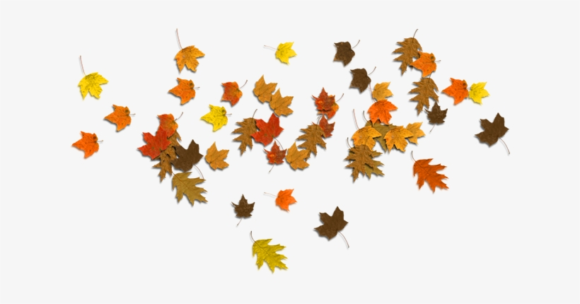 Falling Autumn Leaves Png Banner Freeuse Stock Fall Sale Transparent Png 624x350 Free Download On Nicepng