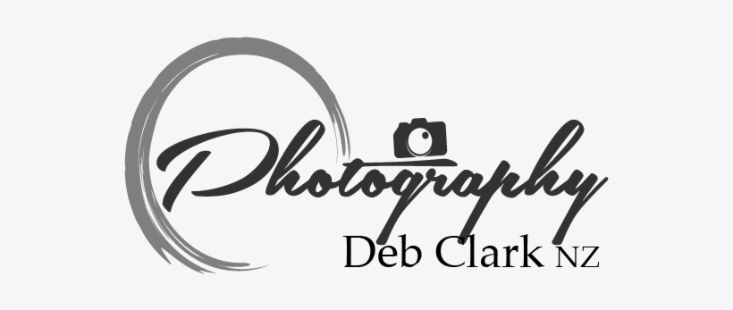Photography Logo Png Hd Transparent PNG - 685x445 - Free