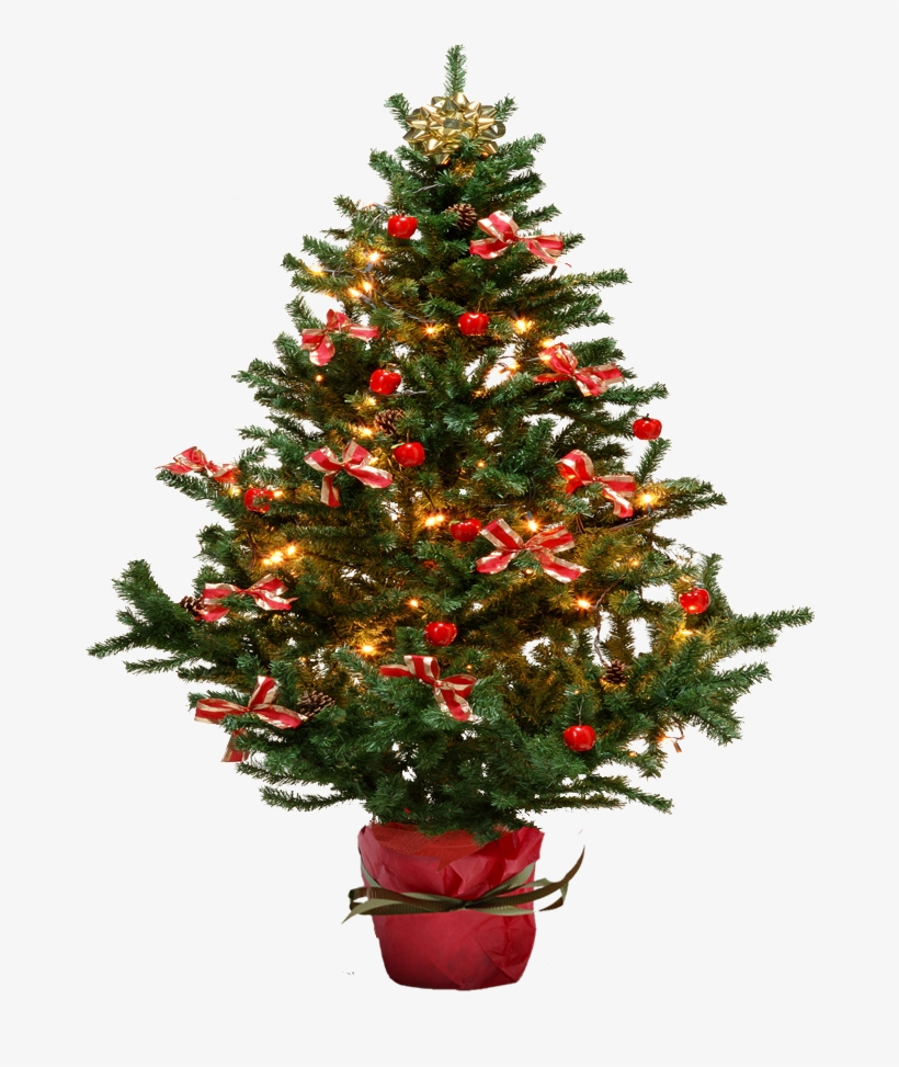 Christmas Tree Free Png Transparent Background Images Potted