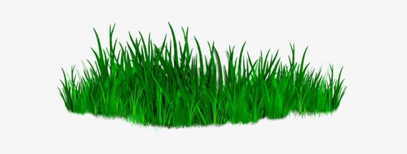 All Editing Grass Png Zip File, Photoshop All Editing - Grass Png