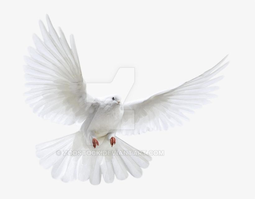 Svg Freeuse Download Transparent Dove Background White - Transparent