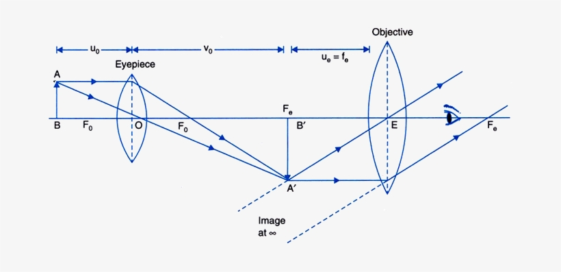 Draw A Ray Diagram Of A Compound Microscope Diagram