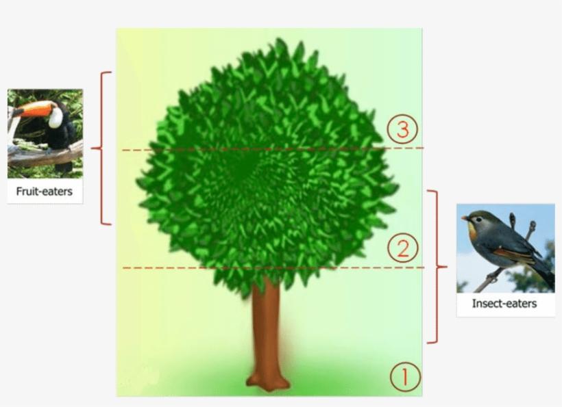 the usage of the neem tree - scientific diagram